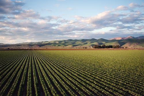 Succession Planning for Farm